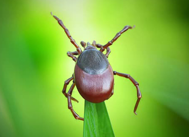 Tick Bites Causes Lyme Disease for Your Health System